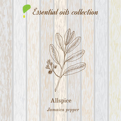 Jamaica pepper, essential oil label, aromatic plant