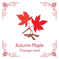 Autumn maple branch with leaves and seeds. Vintage card