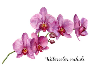 Watercolor orchids. Hand painted floral botanical illustration isolated on white background. For design or print.