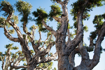 Curvy Tree Branches
