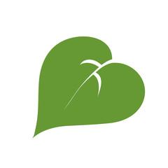 a simple green leaf