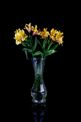 Bouquet of yellow Peruvian lily Astroemeria flowers in vase