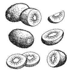 Kiwi fruit graphic black white isolated sketch illustration vector