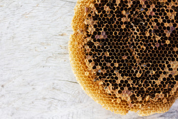 Beehive, bee nest on wooden floor with copy space blank space