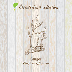 Pure essential oil collection, ginger. Wooden texture background