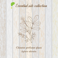 Pure essential oil collection, chinese perfume plant, aglaia odorata