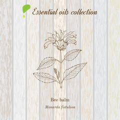 Pure essential oil collection, bee balm. Wooden texture background.