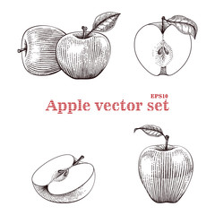 Apple vector set hand drawing