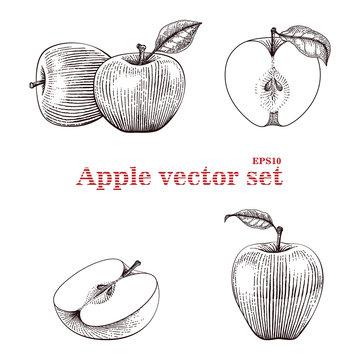 Apple vector set hand drawing