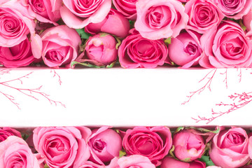 border of Beautiful fresh sweet blue rose for love romantic valentine or wedding background