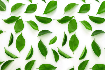 Top view shot of green leaves flat lay on white background
