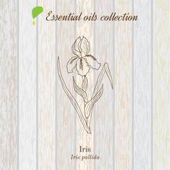 Pure essential oil collection, iris. Wooden texture background