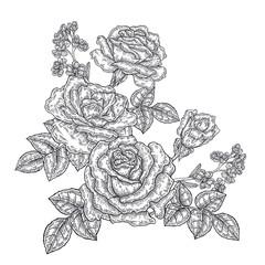 Rose flowers and leaves in vintage style. Hand drawn botanical vector illustration. Floral design elements
