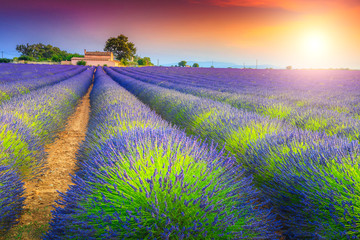 Magical sunset and lavender fields in Provence region, Valensole, France