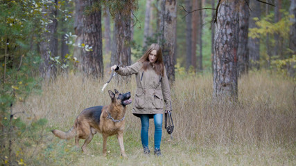 Young woman playing with a shepherd dog in autumn forest - throws a stick