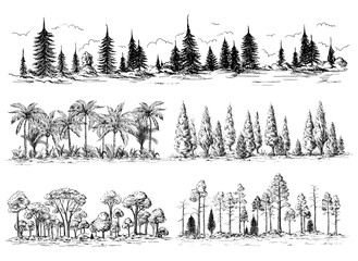 set of different landscapes with trees forest silhouettes with coniferous and deciduous exotic palm trees American redwoods hand drawn vector illustration Sketch design.