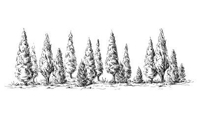 panoramic view of the forest from cypress trees hand drawn vector illustration Sketch design.