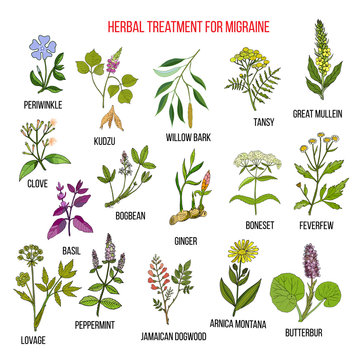 Collection of medicinal herbs for migraines relief