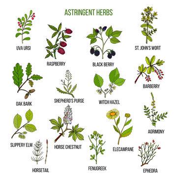 Astringent herbs. Hand drawn set of medicinal plants