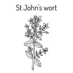 St. John s wort Hypericum perforatum , medicinal plant.