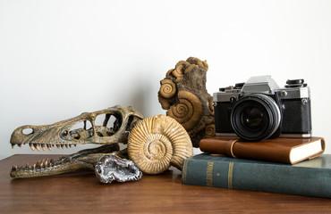 Collezione di antichità