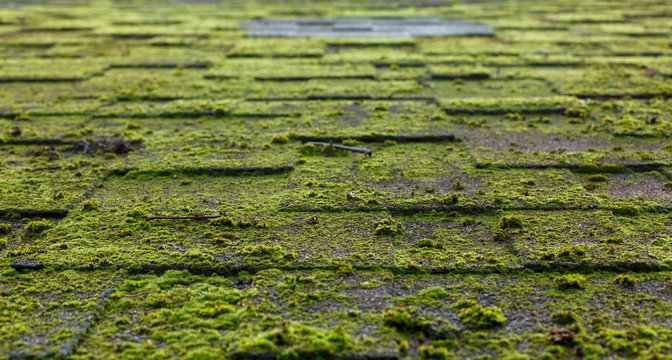 Roof covered with moss