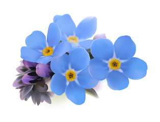 Forget-me-not. Myosotis.