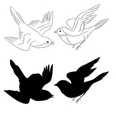 The outline and of the silhouette of the birds set of six vector illustration