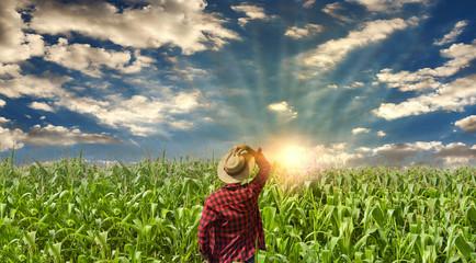 Farmer at field at sunrising