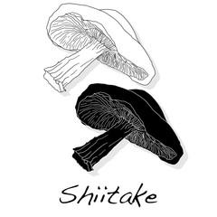 Shiitake mushroom vector illustration