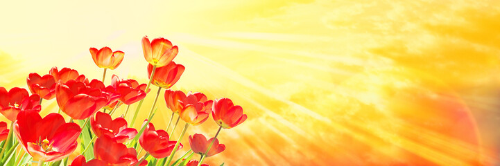 Red Tulips, Yellow Sky