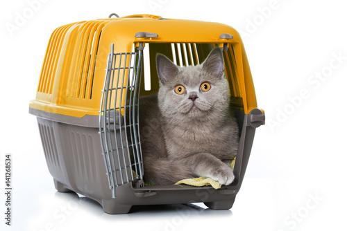 katze in transportbox stockfotos und lizenzfreie bilder. Black Bedroom Furniture Sets. Home Design Ideas