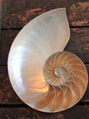 nautilus shell cross section spiral Fibonacci  symmetry growth swirl golden ratio pompilius copy space mollusk pearl