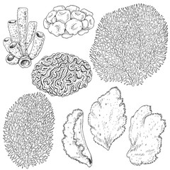 Sketch of  corals  set