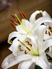 closeup of beautiful white flowers with blur background