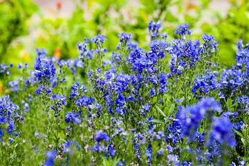 closeup of beautiful flowers with blur background
