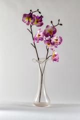 Jarrón con orquídeas