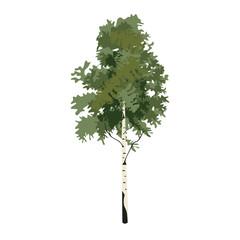 Tree birch clip art, vector