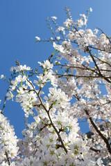 .Spring burgeon
