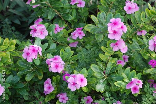 Ciel nuage plage fleur plante botanique exterieur for Plante exterieur jardin