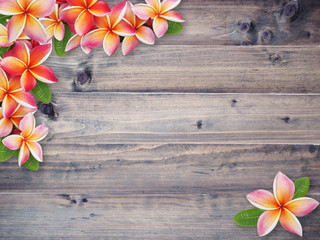 plumeria flower on brown wood background