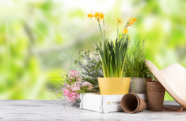 Printed kitchen splashbacks Narcissus Garden tolls and spring seedling isolated on white background. Rubber, narcis and tulips.