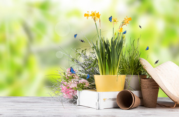Canvas Prints Narcissus Garden tolls and spring seedling isolated on white background. Rubber, narcis and tulips.