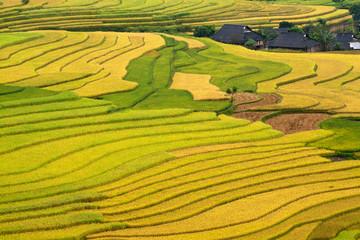 Garden Poster Rice fields Terraced rice fields in Vietnam