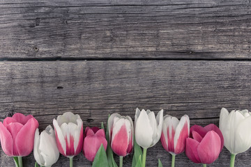 Frame of tulips on rustic wooden background with copy space for message. Spring flowers. Greeting card for Valentine's Day, Woman's Day and Mother's Day. Top view