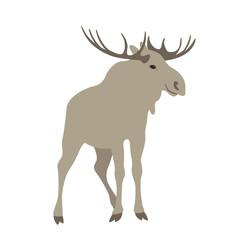 moose  vector illustration style Flat