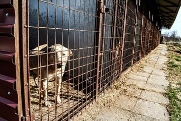 Dog shelter - Hope - animal cruelty