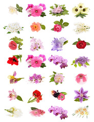 Beautiful spring flowers collage isolated on white background