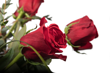 Rosen; rote Rosen;Blumen:Natur