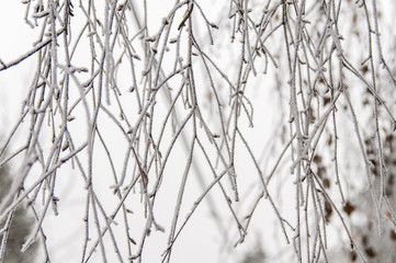 Snow on branches on cloudy winter day